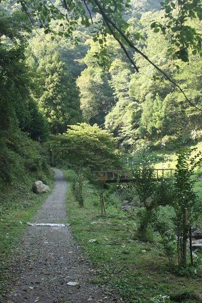滝に向かうまで山道を歩く