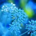花咲き待ち