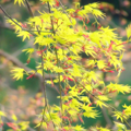 Photos: 春色萌え~ ♪