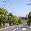 写真: 銀杏並木(南島原市西有家町)