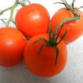 Photos: 家庭菜園 トマト