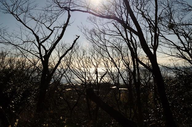 2014-01-19 ニコン 二宮よさこい 菜の花富士山 001