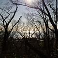 Photos: 2014-01-19 ニコン 二宮よさこい 菜の花富士山 001