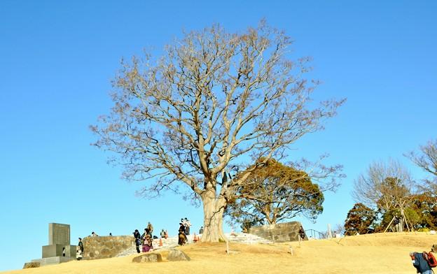 2014-01-19 ニコン 二宮よさこい 菜の花富士山 084