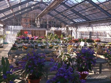 とちぎ花センター 2月