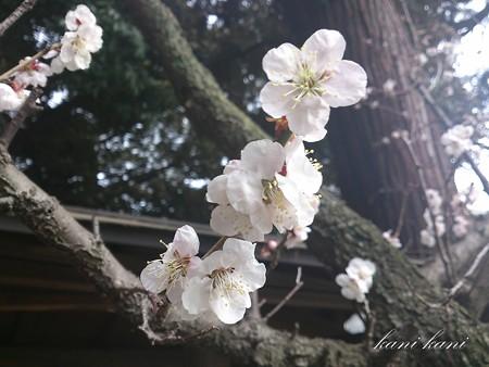 朝日の森神社