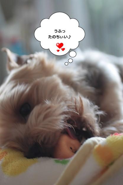トマちゃん LOVE♪
