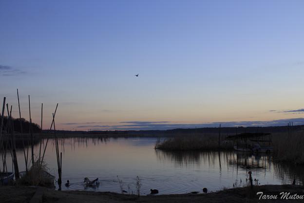 朝焼けの印旛沼