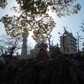 Photos: 天王寺動物園と通天閣