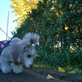 写真: 121127_icho_walking_4
