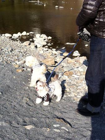 相模川の川辺で散歩 2