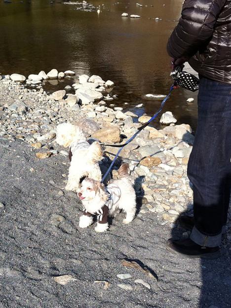 写真: 相模川の川辺で散歩 2