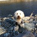 写真: 相模川の川辺で散歩 4