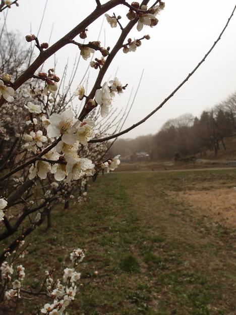 異常気象の春