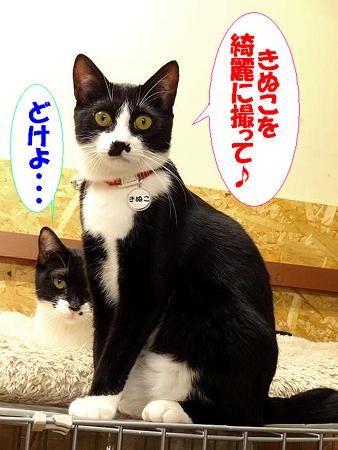 きぬこ&ロビン