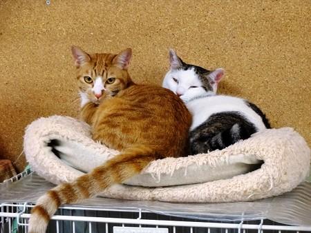 茶太郎「ハッチ兄ちゃんと寝てるんだから!邪魔しないで!」