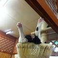 Photos: スケキヨ・・・ロビン(笑)