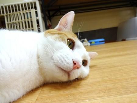 ミント「床が冷たくて気持ちいい~」