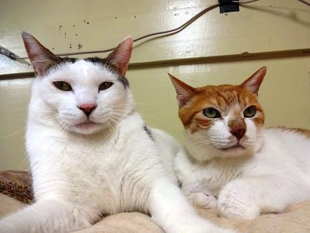 ハッチ「健全な関係です」 あつし「一緒に寝てるだけです」