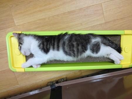 サブレのベッド
