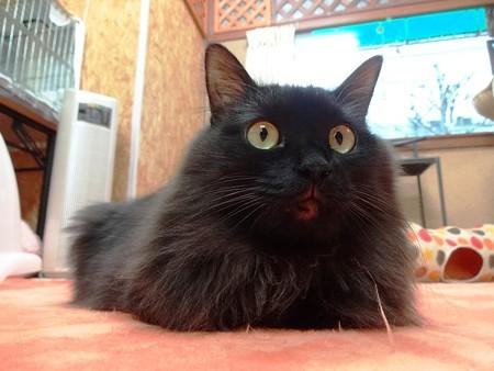 ルビー「え!?あたしがスネてた!?」