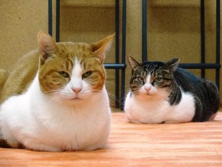 グリコ&オリーブ「私たち、ママ友です」