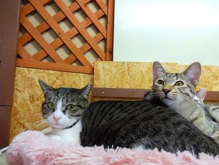 グリコ&マサキ