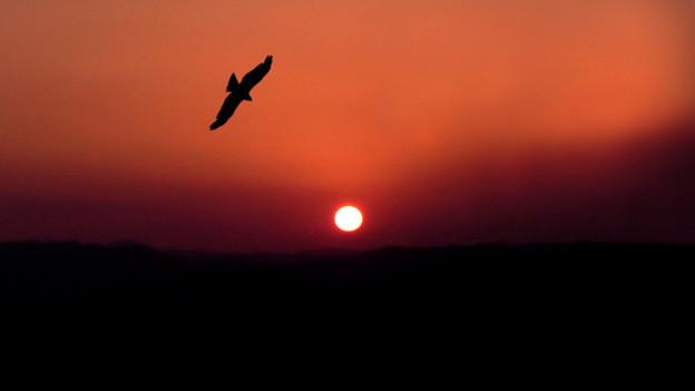 鷹のいる夕日