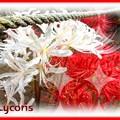 Photos: 紅白彼岸花。