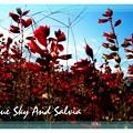 Photos: 秋花壇。