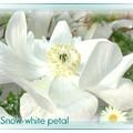 Photos: 真っ白♪