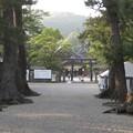 写真: 出雲大社 松の参道から見た銅鳥居と境内