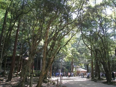 出雲大社 彰古館から素鵞社へ新緑のトンネル