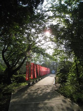 出雲大社から歴史博物館へ 新緑のトンネル