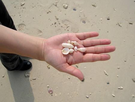 沖縄 名護湾3 20071116