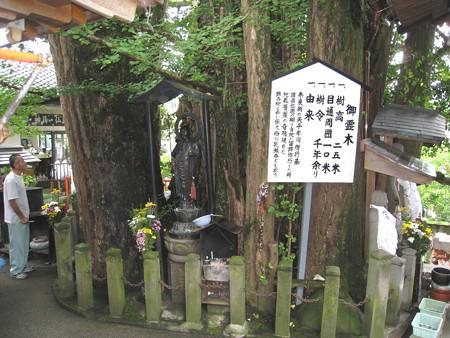 大分 高塚地蔵尊05 樹齢千年乳銀杏
