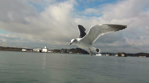 松島湾 海猫G-8