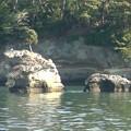 写真: 松島湾遊覧 島巡り2