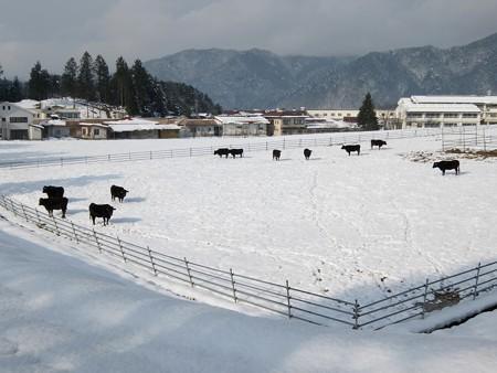 飛騨高山高山田校の並木道7