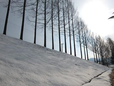飛騨高山高山田校の並木道9