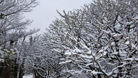 20140211-2 梅林雪景色