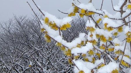 20140211-5 梅林雪景色