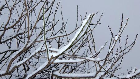 20140211-6 梅林雪景色