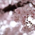 Photos: 春花