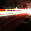 Photos: テールランプの光がサクラを照らして