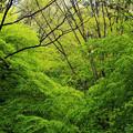 Photos: 新緑に未来への希望を感じて