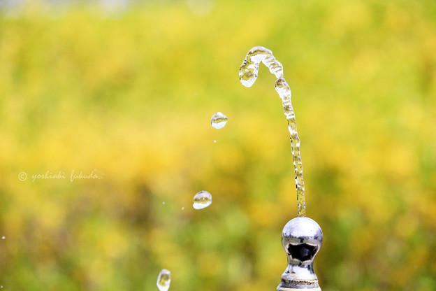 水シリーズ 水道水