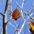 秋のひだまり