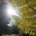 秋の日射し