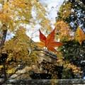 秋の落し物 I